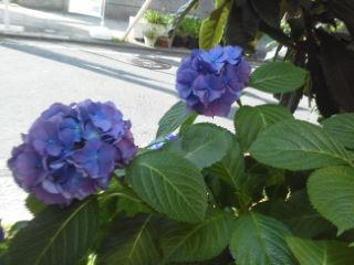 青と紫の花