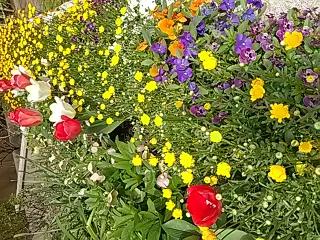 元中学校の校庭の花壇に咲く花たち